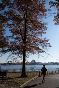 Oak tree in East river Park