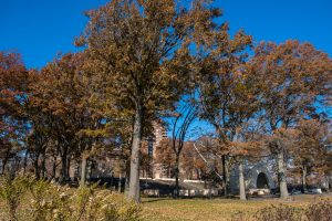 Oak trees in autumn, East River Park. Marcella's oak is in the foreground. Photo by Pat Arnow